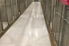 Kennel concrete coating